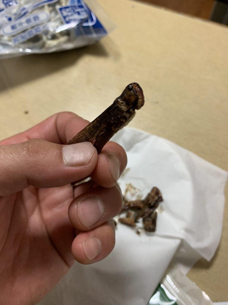 昆虫食 食用イナゴ 横からの図